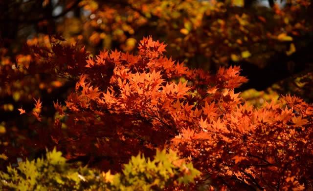 薬師池公園 紅葉